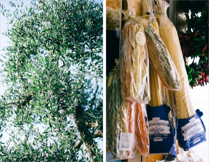 Southern Italian Olive Tree and Pasta