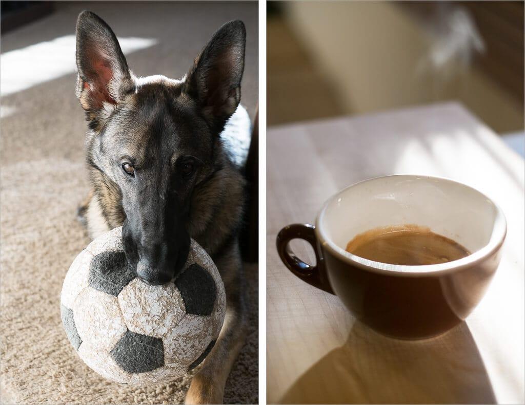 My German Shepherd Arya and a cup of Intelligentsia espresso