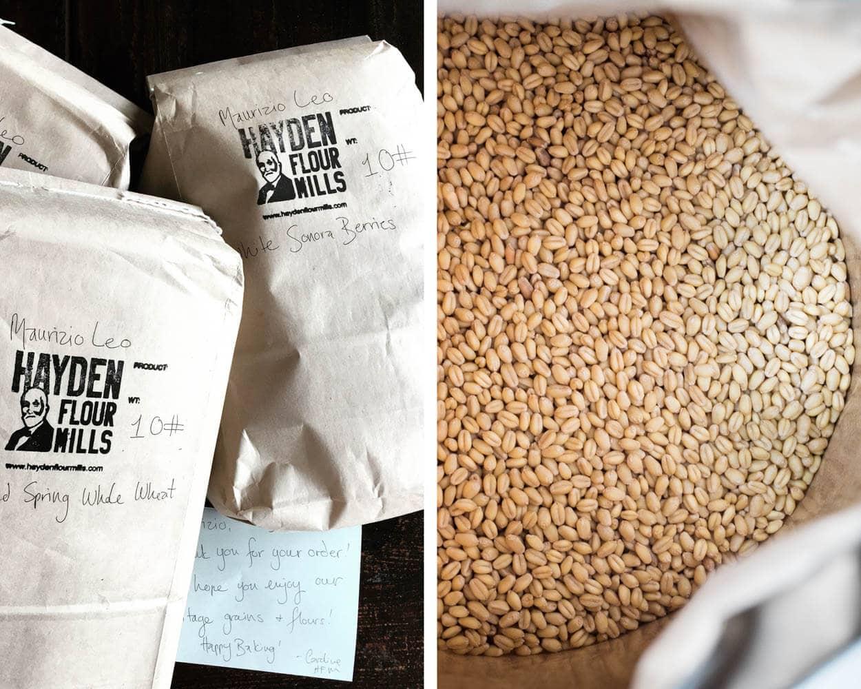 hayden flour mills white sonora