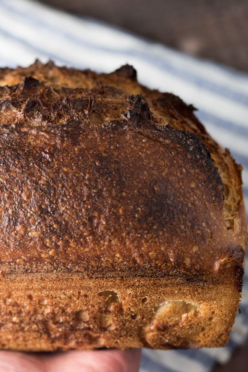 whole wheat sourdough sandwich bread crust