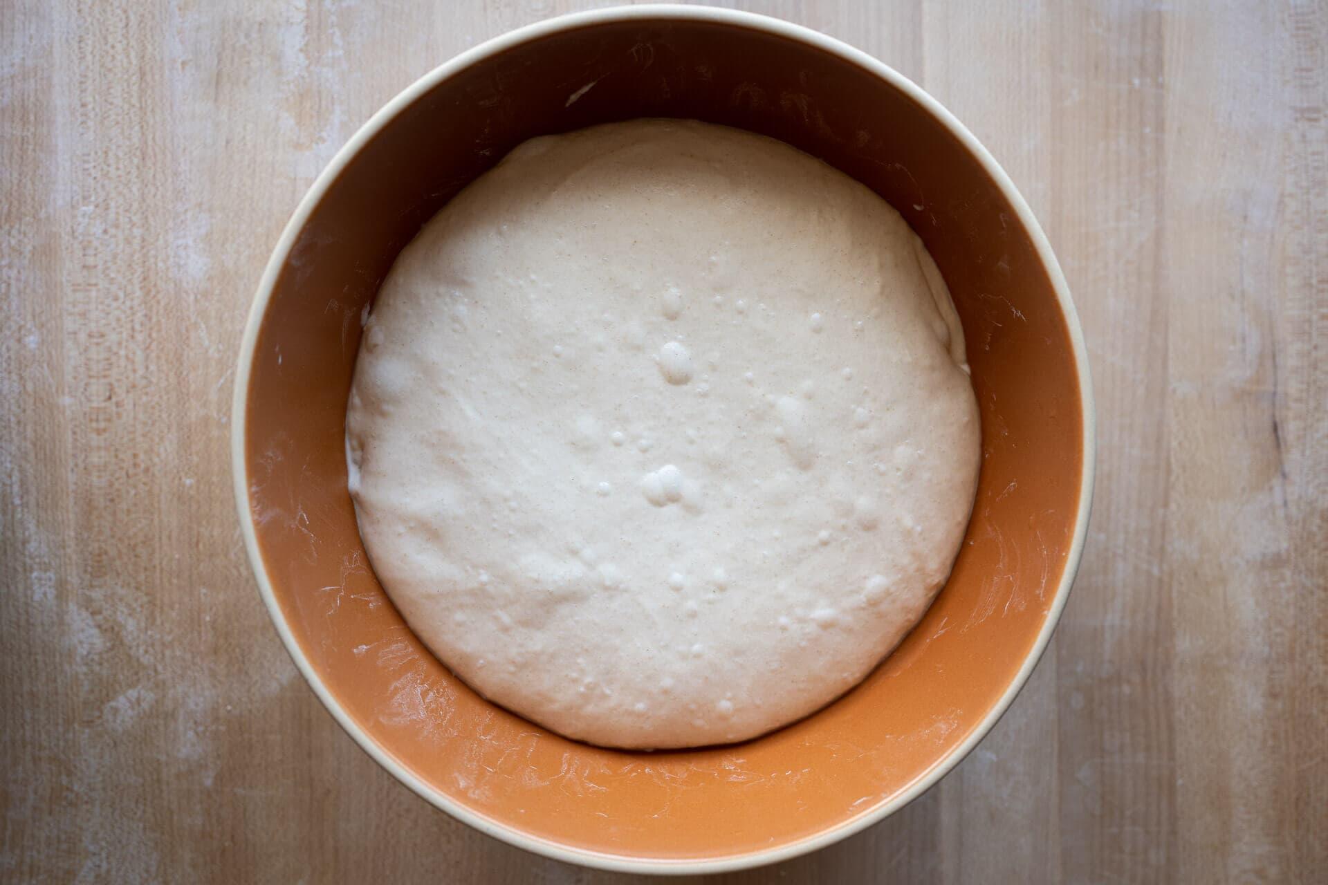Sourdough dough at end of bulk fermentation
